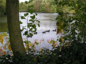 hampstead duck pond