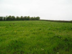 a grassy field
