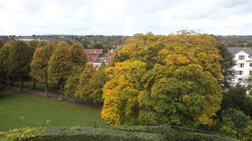 autumn colours in Canterbury