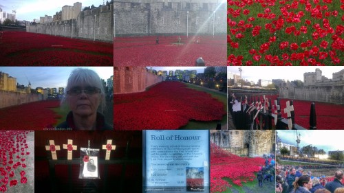 remembrance day tower poppies