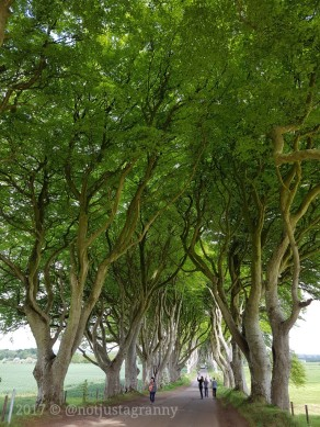 the dark hedges northern ireland