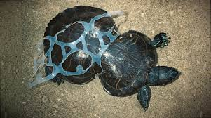 plastic pollution. raising awareness, blue planet 2, plastic pollution, no straw november, raising awareness