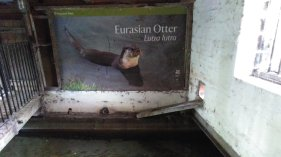 the water mill winchester otters, river itchen
