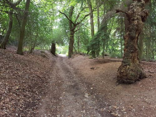the north downs way, pilgrims way guildford, river wey, walking the pilgrims way, the pilgrims way winchester to canterbury, long distance walks england, women walking solo