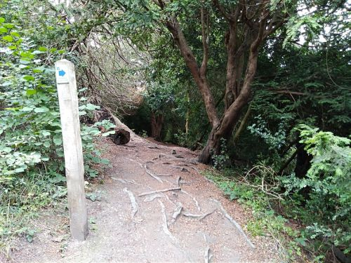 box hill, national trust, walking the pilgrims way, the pilgrims way winchester to canterbury, long distance walks england, women walking solo