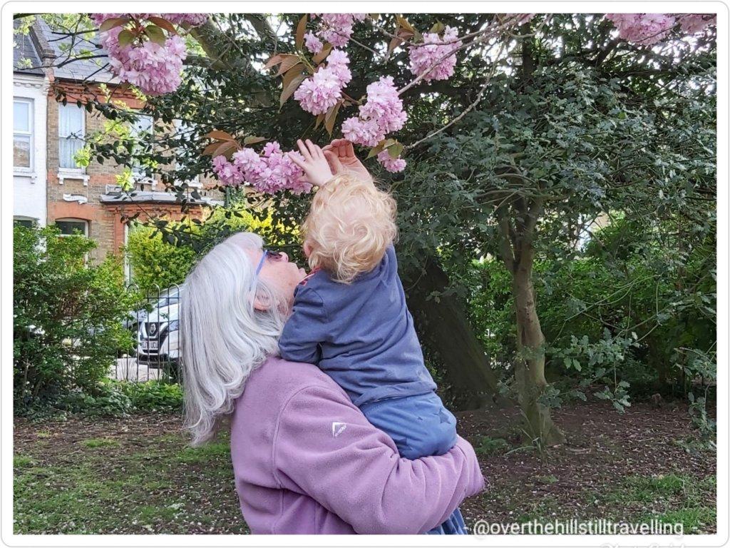 Anny & Mamie inspecting the cherry blossom tree
